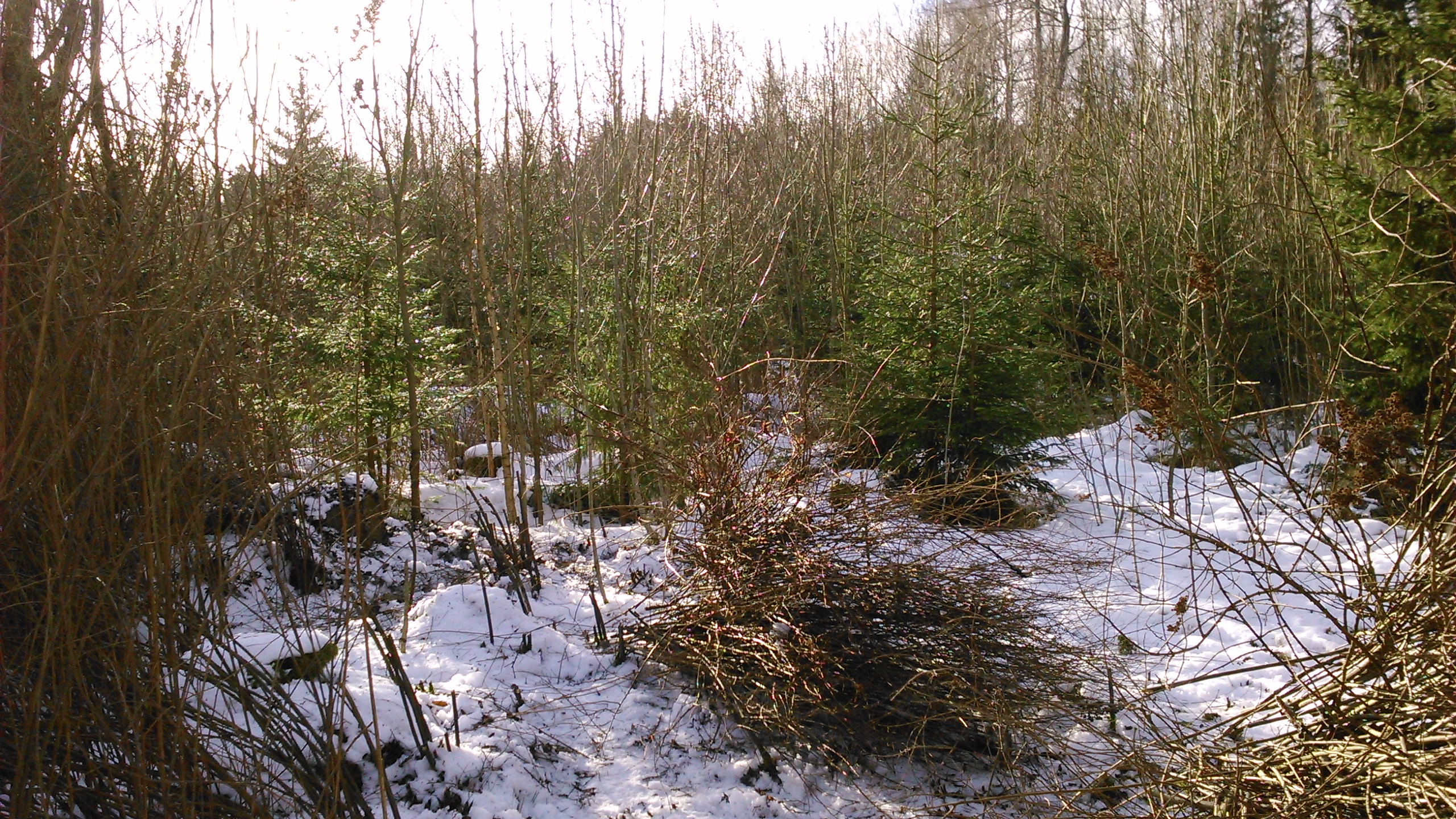 Nu börjar skogen synas !