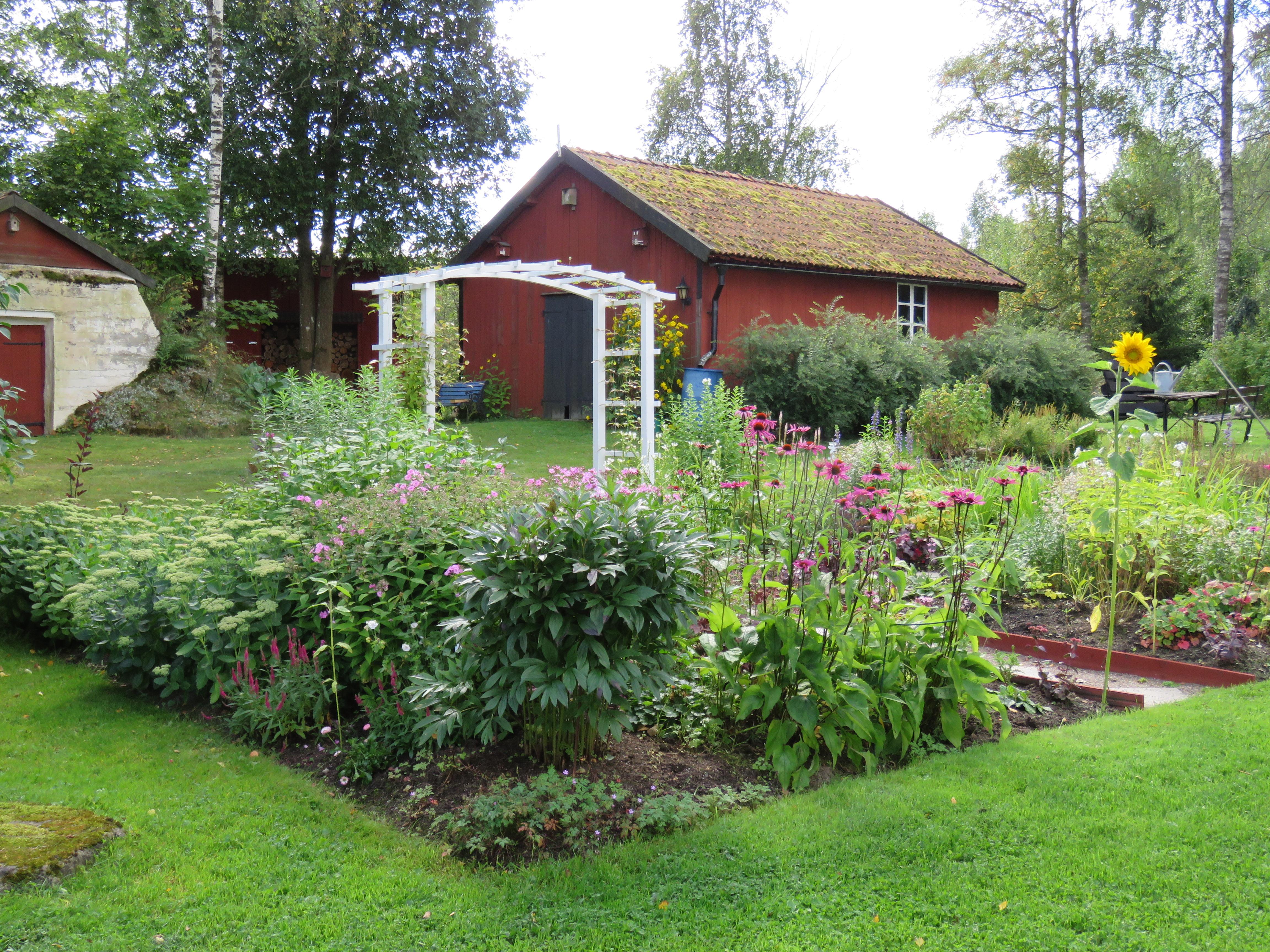 Trädgården just nu …